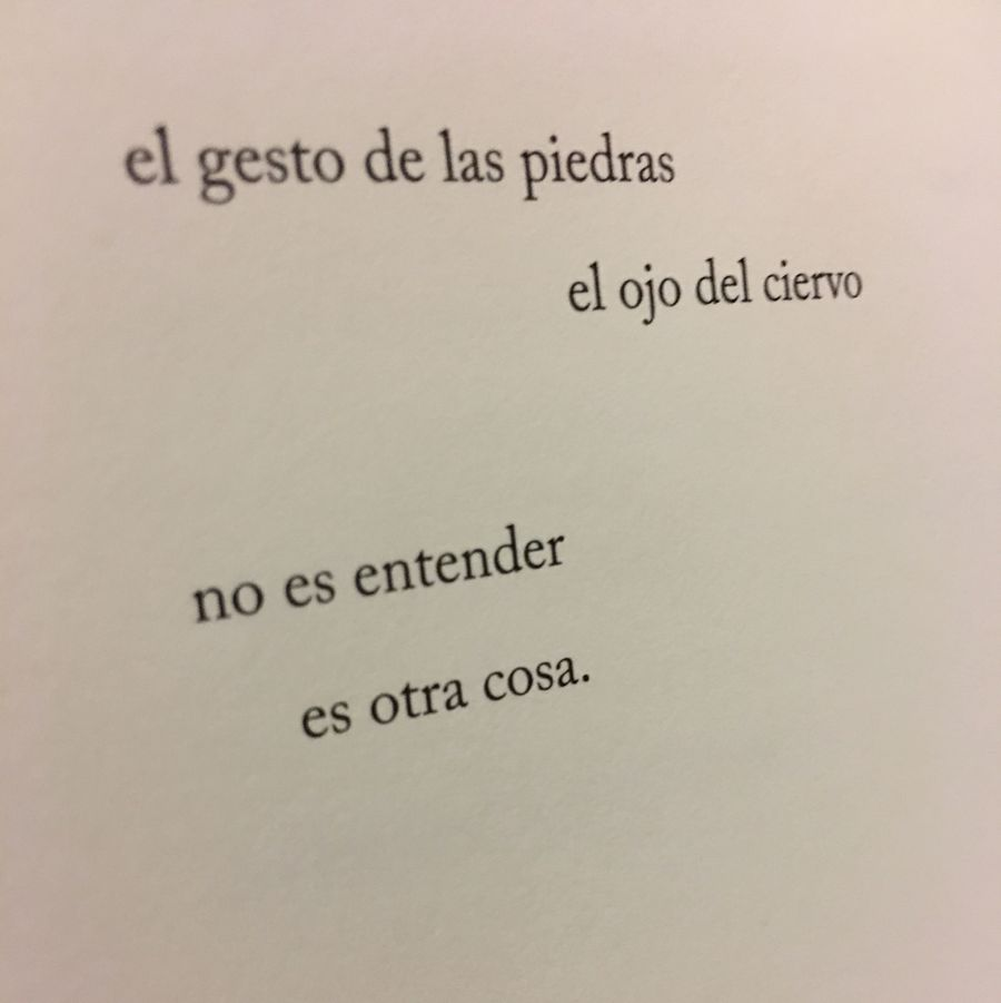 Casi la caída, de Almudena Vega, poema